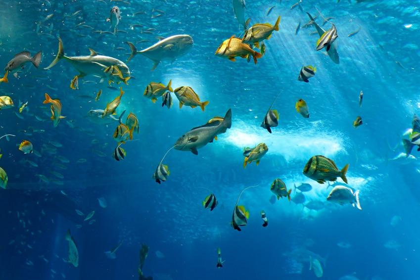 Osmosewasser Aquarium
